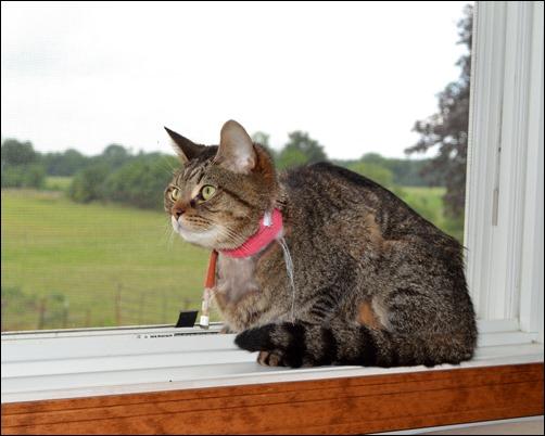 Martin in the window