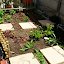 gillespieza's #2 Square Foot garden
