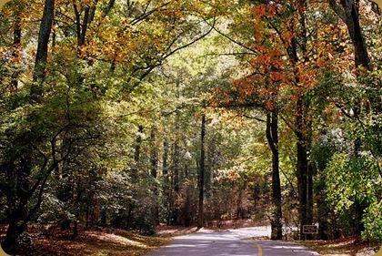 fall in callaway
