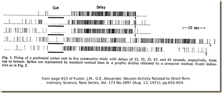 Fuster.1971.fig3
