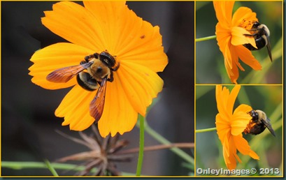 bee collage1