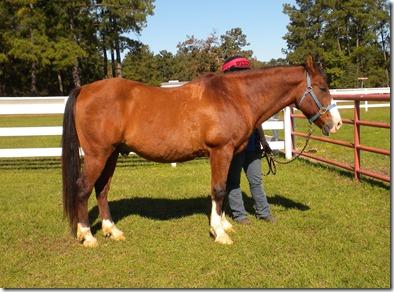 horse camp 054