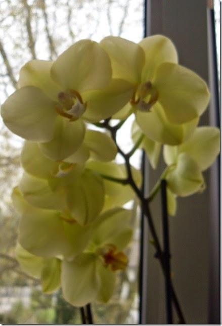 20144 Orchideen (1)