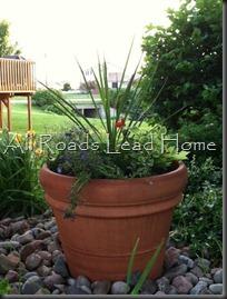 planting flowers blog