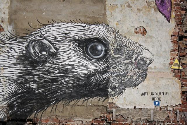 Roa's Rat