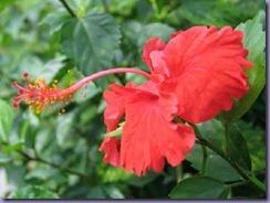 1778315-Travel_Picture-Bunga_Raya