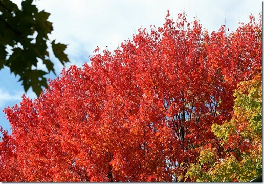 Leaves_Aflame5