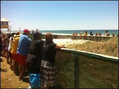 australian-brown-snake-beach (1)