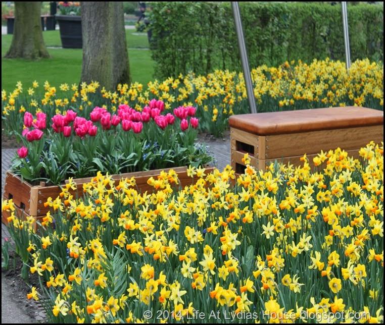 Keukenhof Gardens 7