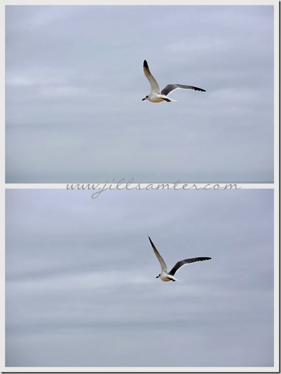 birdsoars