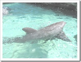 Florida vacation Epcot dolphin swimming outside