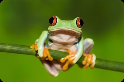 6662tree_frog