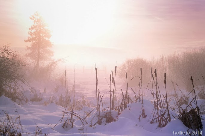 Snowfall6