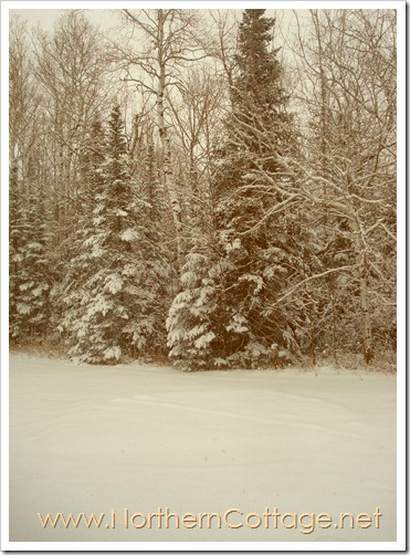 snowy trees@NorthernCottage.net