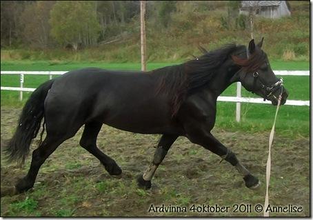 2011-ardvinna-4okt_02
