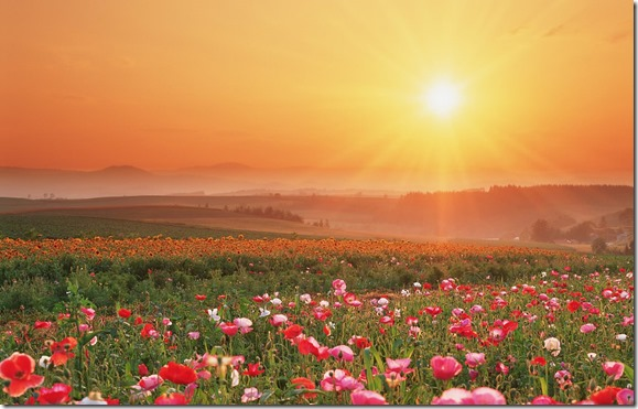 field-of-flowers-wallpaper-1280x800-0144[1]