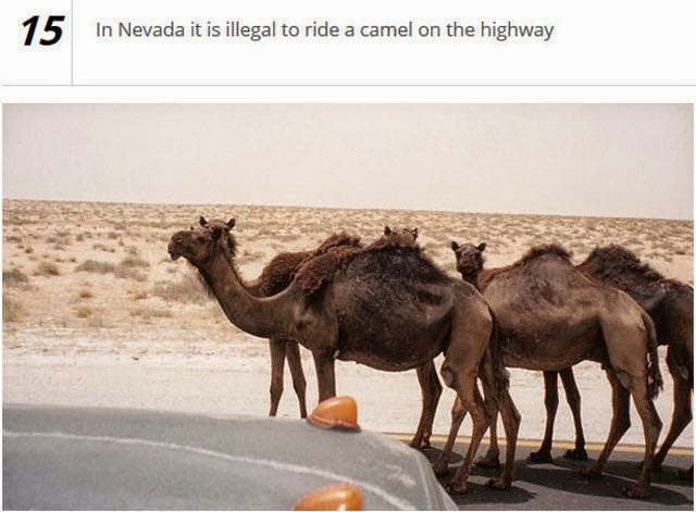 Senseless Driving Laws Worldwide Seen On www.coolpicturegallery.us