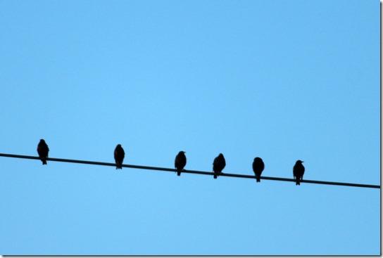 birdwire