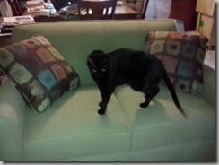 Sheeba and couch