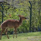 Opelzoo_2012-04-08_759.JPG