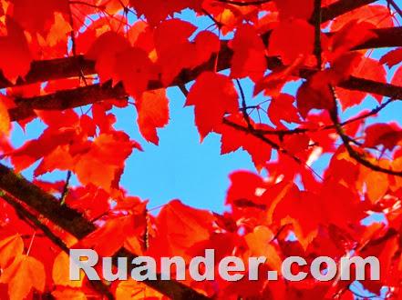 Fall Color 4 Ruander