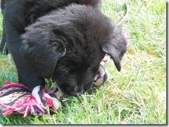 puppy 06
