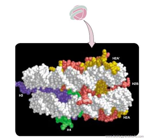 nucleosomal histones