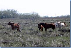 7217 Texas - US-77 - horses