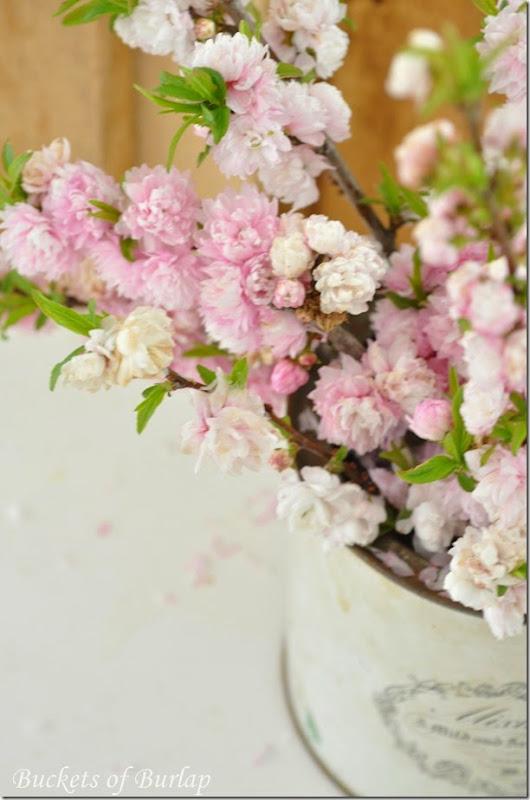 Pink blooms 6