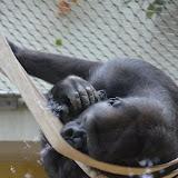 Heidelberger-Zoo_2012-04-09_816.JPG