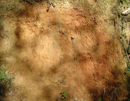 Sables rouges dans un talus de La Ménardais