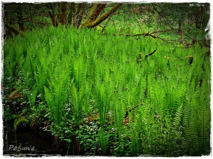 Grønn glede 5