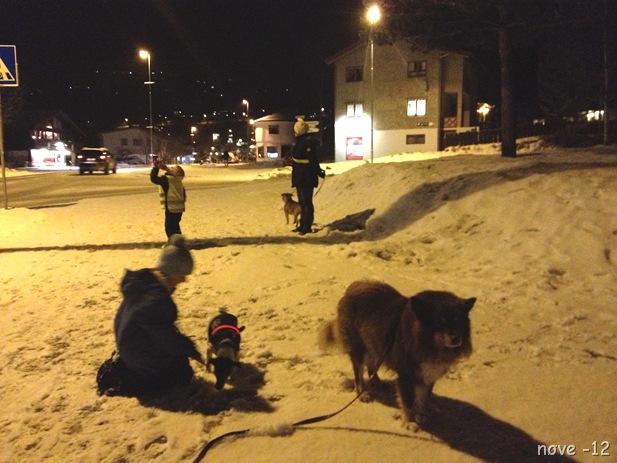 hund 004