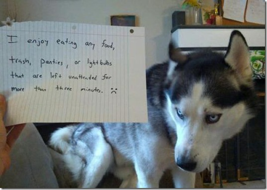 dog-shaming-bad-28