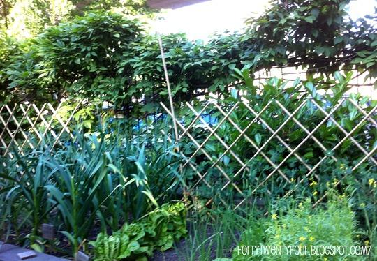 garlic gardens