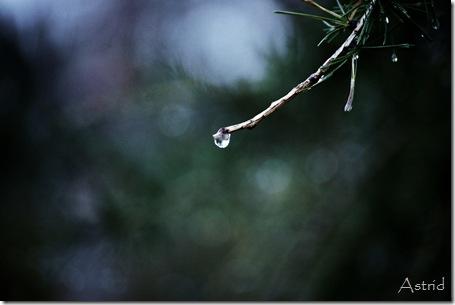Kvanndalstur i årets første snø 070
