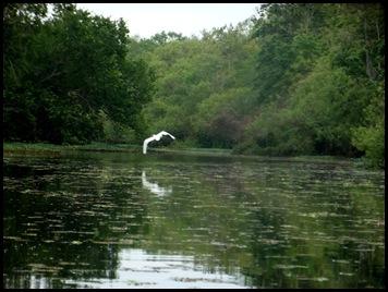 Paddle to Hontoon 189