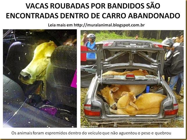 VACAS ROUBADAS POR BANDIDOS SÃO ENCONTRADAS DENTRO DE