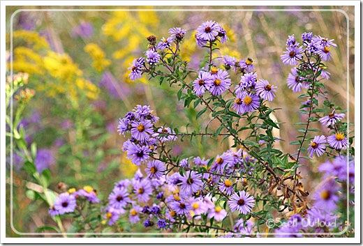 flowersnaturehike