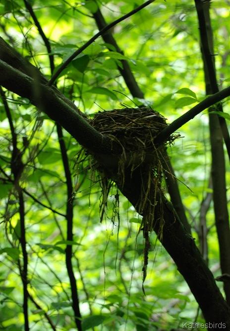 6-7-13 bird nest inwood hills-kab