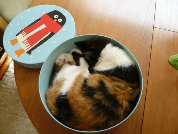 Os gatos não são muito bons em esconde-esconde 20