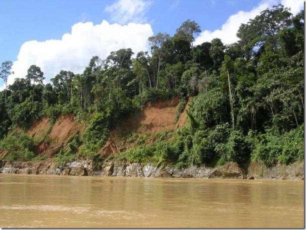 beautiful-amazon-rain-forest-11