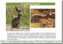τα ζώα της Κύπρου(11)
