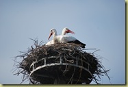 S DSC_0171 Storks 2