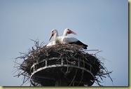 S DSC_0171 Storks 2