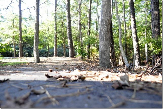 10-3011 bike  woods 179