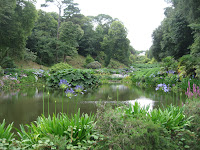 Sub tropical garden pond