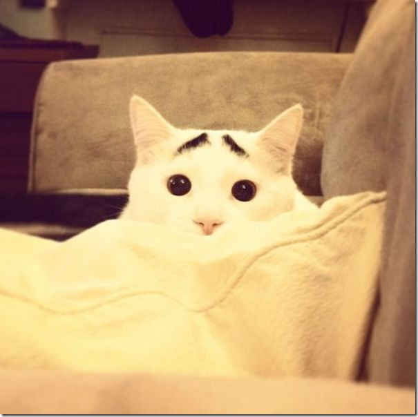 white-cat-eyebrows-23