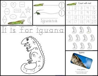 Ii Iguana Extras
