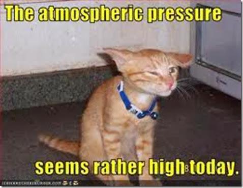 pressure cat